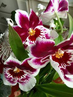 Resultado de imagem para water culture for orchids Water Culture Orchids, Flower Phone Wallpaper, Pink Orchids, Hydroponics, Blue Lace, Beautiful Flowers, Nail Art, Plants, Gardening