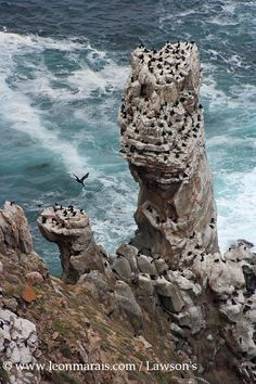 Diaz Point on the tip of Cape Point - plenty of Cormorants!
