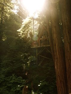 a cabin (sequoia retreat center - ben lomond, california) - Sequoia, Cool Tree Houses, Home Modern, Camping Places, In The Tree, Cabins In The Woods, Interior Exterior, Belle Photo, The Great Outdoors
