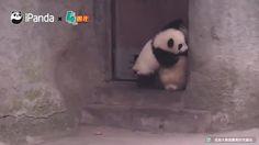 Pandas are so like us - 9GAG