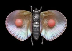 VICTORIAN  Moth Brooch  Silver Shell Coral  H: 3.1 cm (1.22 in)  W: 4.8 cm (1.89 in)   Marks: 'T.T.J. & SON'  British, c.1870