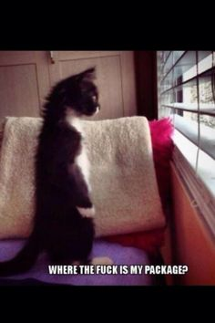 This is SOOOO me waiting for a package for my partner (from a swap on Craftster) to arrive!