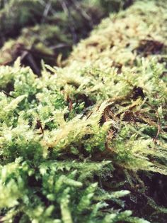 macro green moss woods high quality pictured download. use free of charge anywhere you like totally for free. spread the word, rt for the win.