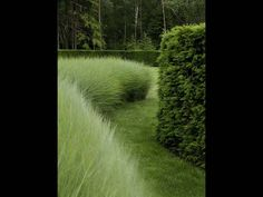 sublime textures - grasses, hedges and trees, so simple and so stunning Wolterinck   Tuin & landschap   Wolterinck Laren