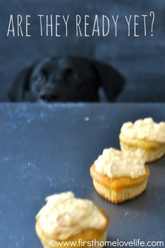 Homemade Doggie Cupcakes *Pup-Cakes* Great Christmas treat for our 4 legged babies.