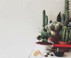 verzameling mini-#cactussen