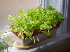 Micro greens and other veggies you can grow indoors. http://www.realfarmacy.com/6-vegetables-that-grow-indoors/