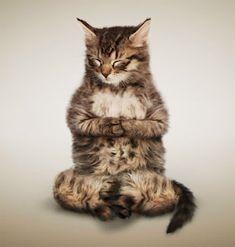 Lindas fotografias de gatos fazendo yoga! « Brasil Universo Digital