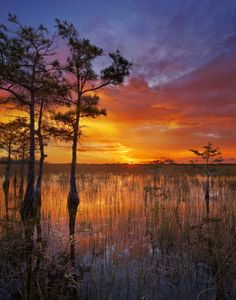Help us celebrate World Wetlands Day! Among the world's most productive environments, wetlands are critically important to freshwater supply, biodiversity, flood control and food production. They're also places of stunning natural beauty. Photo from the Pa- -okee overlook at Everglades National Park in Florida courtesy  of Paul Marcellini. America's Great Outdoors