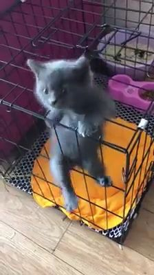 Master cat - Have fun with Wag Pets! Have fun with Wag Pets! Have fun with Wag Pets! Funny Animal Videos, Cute Funny Animals, Cute Baby Animals, Funny Cute, Animals And Pets, Cute Cats, Kittens Cutest, Cats And Kittens, Funny Kittens