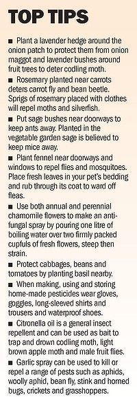 lots of great tips on growing certain herbs as companion plants for vegetables for natural pest control