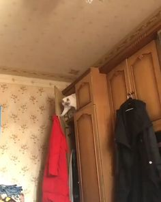 Funny cat moment :v :D Source by yonthompson videos wallpaper cat cat memes cat videos cat memes cat quotes cats cats pictures cats videos Funny Animal Memes, Funny Cat Videos, Funny Animal Pictures, Cat Memes, Dog Videos, Funny Cute Cats, Cute Cats And Kittens, Cute Funny Animals, Cute Dogs