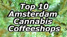 Amsterdam is famous for its decriminalized cannabis coffeeshops. They come in all shapes, styles and sizes. The chances are - there is a shop to suit any marijuana lovers needs and dreams. Check out the videos below to discover some of our favorites! Click on the shop name to view their Smokers Guide profile page where you can read and write reviews. Don't forget to upload your own candid pictures from your own experience! Top 10 Amsterdam, Smokers, Cannabis, Candid, Coffee Shop, Don't Forget, Profile, Suit, Tours