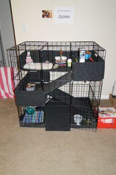 Do you have a Bunny Condo??? - BinkyBunny.com - House Rabbit Information Forum…
