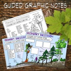 Primary and Secondary Ecological Succession Guided Graphic Notes High School Biology, High School Science, Life Science, Science Ideas, Nutrient Cycle, Ecological Succession, 7th Grade Science, Butterfly Life Cycle, Class Notes