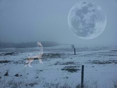 #Formy #Sad #Wolf #Moon