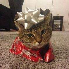Eux aussi veulent leurs cadeaux !