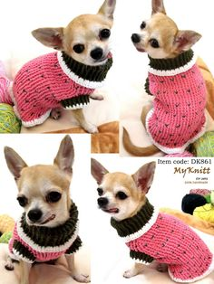 A lovely Chihuahua....wearing a lovely sweater!