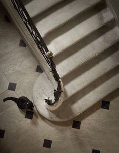 Myrtille takes guard at the bottom of the staircase in Chateau de Varenne, Provence; photographed by Rachael Hale McKenna for her book The French Cat