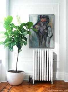 Image result for indoor fig