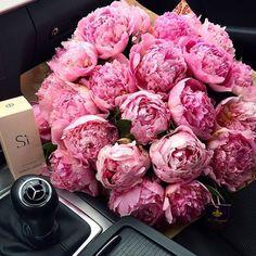 Свежие Цветы, Розовые Цветы, Красивые Цветы, Розовые Лепестки, Цветок Кактуса, Экзотические Цветы, Желтые Розы, Фото Цветов, Цветочные Композиции