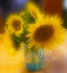 Sunflowers in blue mason jar
