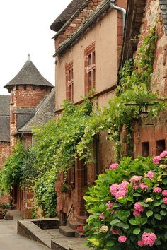 Collonges-la-Rouge ~ France #hydrangea