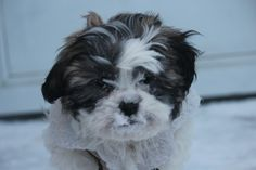 Photos - The Weather Network Weather Network, Snow, Photo And Video, Face, Dogs, Photos, Animals, Pictures, Animais
