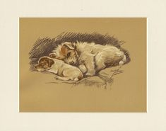 JACK RUSSELL TERRIER OLD 1940/'S DOG ART PRINT by MAC LUCY DAWSON READY MOUNTED