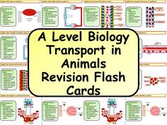 Free A Level Biology Transport in Animals Revision Flash Cards Flashcards Revision, Biology Revision, A Level Biology, A Level Revision, Revision Strategies, Teaching Strategies, Science Cells, Free Teaching Resources, Task Cards