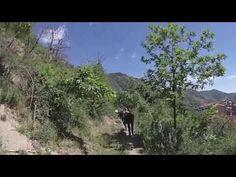 #trekking con l' #asino in #Sila Greca in #Calabria