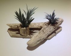 Driftwood display, Air plants, Tillandsia, Driftwood sculpture, Art, Crafts by DriftwoodCreationsUK on Etsy Driftwood Sculpture, Sculpture Art, Driftwood Candle Holders, Air Plant Display, Art Crafts, Nautical Theme, Air Plants, Recycled Materials, Handmade Items