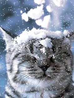 All Animated Images: Does Your Cat Love Snow? :D