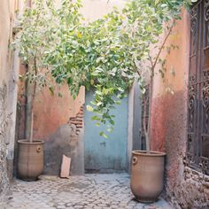 Photography of Jose Villa - Morocco - Large potted trees