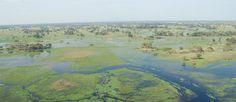 http://mundodeviagens.com/delta-de-okavango/ - O Delta de Okavango, no Bostwana, desperta a curiosidade de todos os amantes da natureza pura. Basta termos em mente a imagem fascinante de manadas de elefantes, búfalos e hipopótamos a trilhar os quase 18 mil quilómetros de terra molhada em plena África para sentirmos uma atração por este universo.