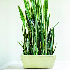 Les 7 meilleures plantes d'intérieur | Selection