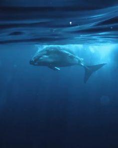 Nature Animals, Animals And Pets, Funny Animals, Cute Animals, Strange Animals, Beautiful Sea Creatures, Animals Beautiful, Scary Sea Creatures, Whale Video