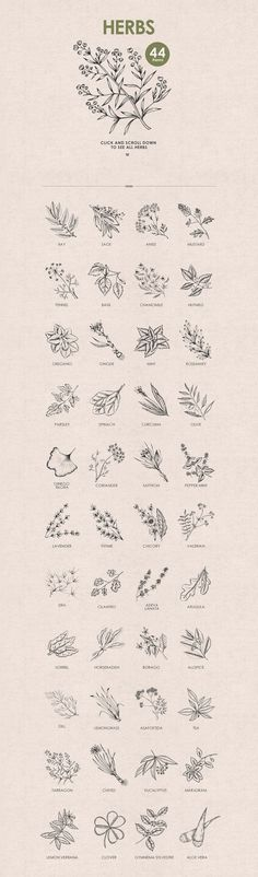 Herbs, Spices, Nuts. Hand drawn set. - Illustrations - 2