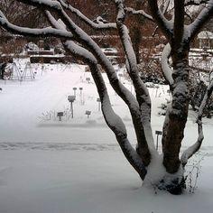 hibernation in botanical garden  #winter #winterwonderland #snow #tree #zima #deinbayern #089 #münchen #igersmunich #munich #natureknowsbest #icantwaitforspringtocome