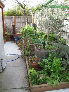 I love that this person has a fruitful veggie patch in their little courtyard!