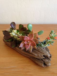 Succulent Driftwood Home Accent Decor Centerpiece by MakerDyer
