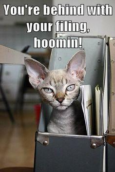 Supervisor kitteh has spoken...