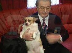 Imagini pentru ultimul copil al lui vadim tudor in imagini Tudor, Dogs, Animals, Google, Animales, Animaux, Pet Dogs, Doggies, Animal