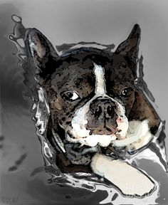 Boston Terrier.  Channeling Peter Lorre Painting  - Boston Terrier.  Channeling Peter Lorre Fine Art Print