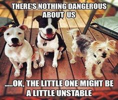 Dangerous animals pitbulls and terrier.