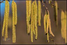 Early spring by Vesna Holjevac Early Spring, My Photos, Beginning Of Spring, Start Of Spring