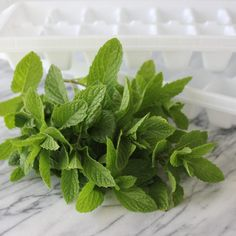 How to Freeze Mint Leaves