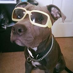 Titan is looking cool with the shades. Follow @gingerlybroken for updates.