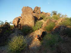 Orbicular Granite at Sunrise