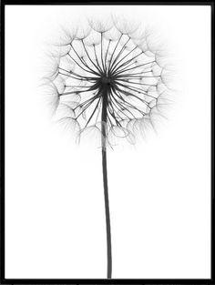 Wall Art- Dandelion Modern Print (A-26)